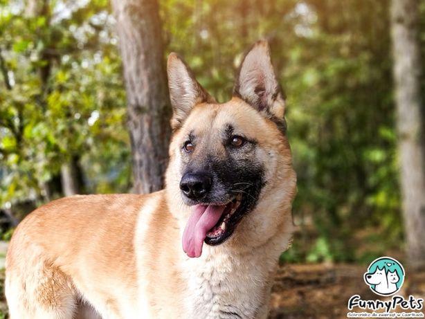 Piękny, przyjazny, rudy pies Miodek do adopcji!