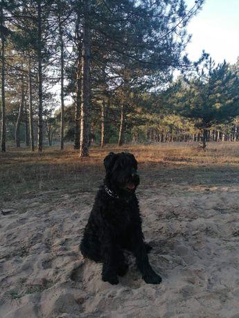 Вязка собак Резин