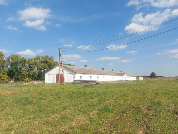 Продам складське приміщення (ферма)