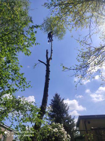 Wycinka drzew, pielęgnacja drzew , usuwanie suszu- metodą linową,rębak