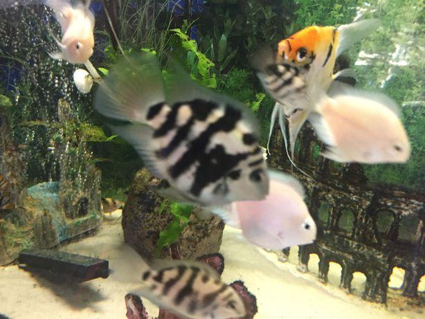 Peixes Aquário Parrotfish