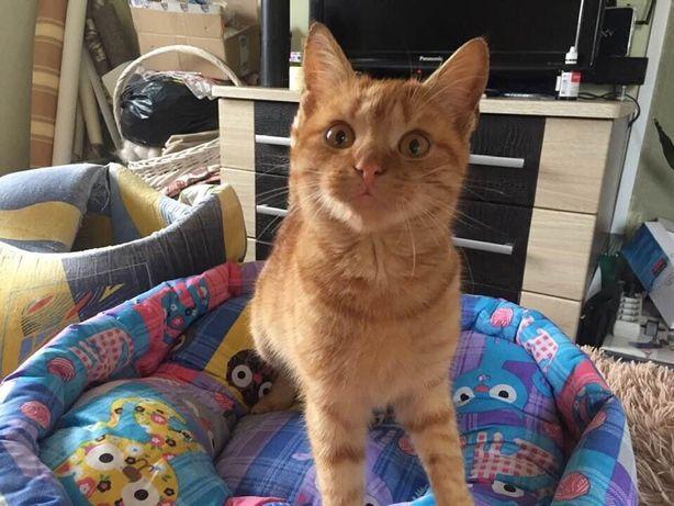 5 мес рыжий котик