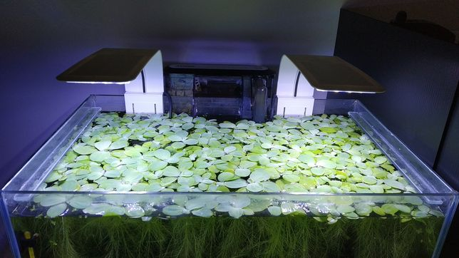 Luz Led para aquário
