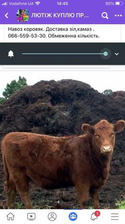 Продам коровяк