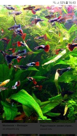 Продам акваріумні рибки