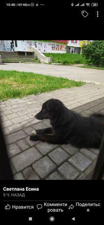 Пропала замечена собака Преображенского
