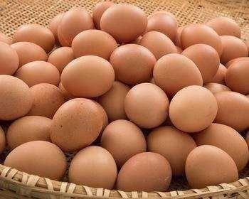 Инкубационные Яйца Бройлеров КОББ 500молод,КОББ500,РОСС308,708