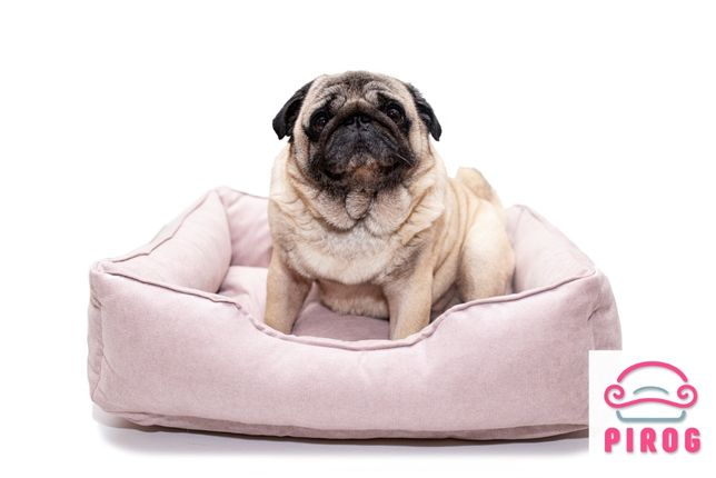 Бесплатная доставка! Мягкое место, лежак, домик для кота или собаки