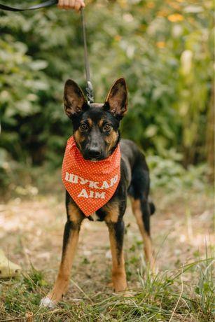 Шикарная собака Кьяра ищет дом!