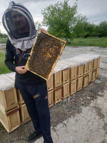 Бджолопакети. Пчелопакеты 16.06