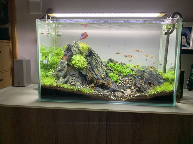 Aquario 60x30x36
