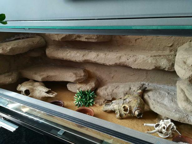 Nowe terrarium + 4 gekony lamparcie