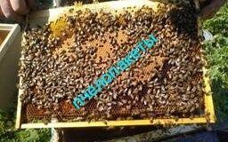 Заказы на пчелопакеты