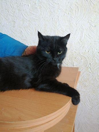 Юный котик Уголек