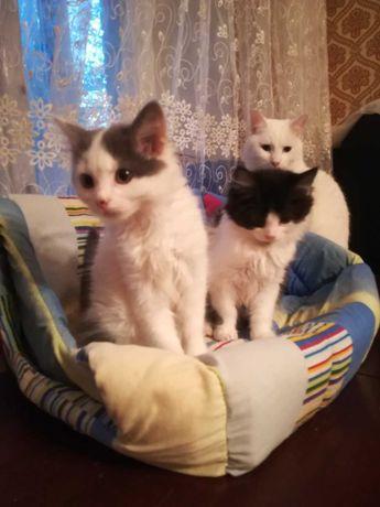 Домашние котята в добрые руки, девочки