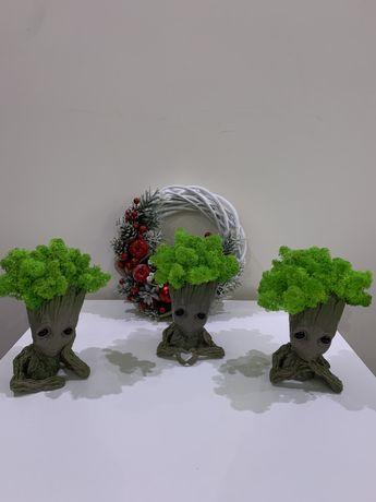 Грут з стабілізованим мохом