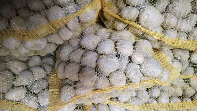 Ziemniaki z wlasnej uprawy