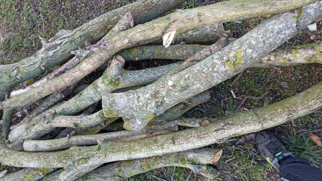 Drewno orzech włoski kłody 2 drzew