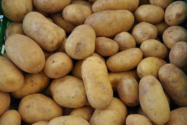 Ziemniaki kaliber 35-50 Wineta 0,7 zł/kg