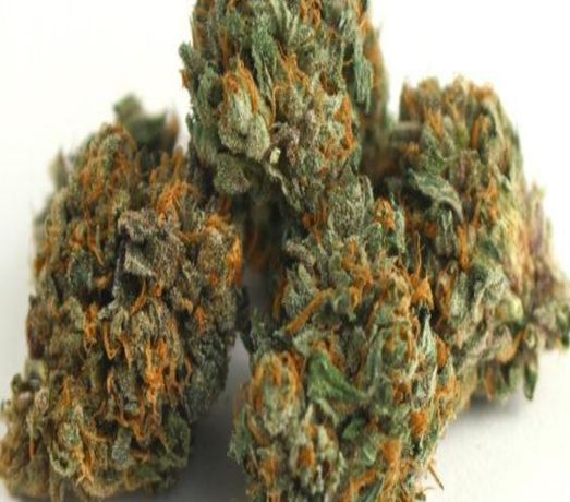 Susz marihuany MOCNY
