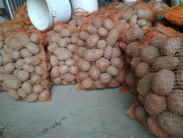 Sprzedam ziemniaki Bellarosa