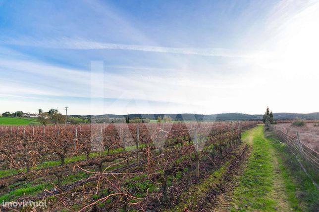 Terrenos agricolas com 14 hectares de Vinha em Estremoz