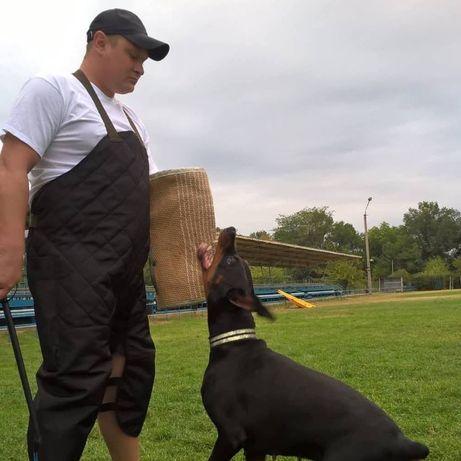 Дрессировка, предлагаю услуги по подготовке собаки к охране двора