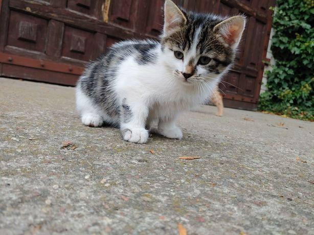 Oddam koty - bezpłatnie