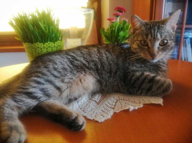 Piękna kotka szuka kochającego domu