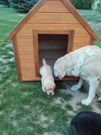 Buda dla psa rozmiar M