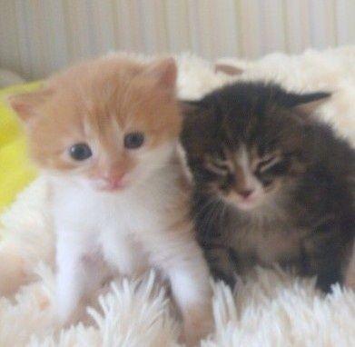 Котята, котинята.