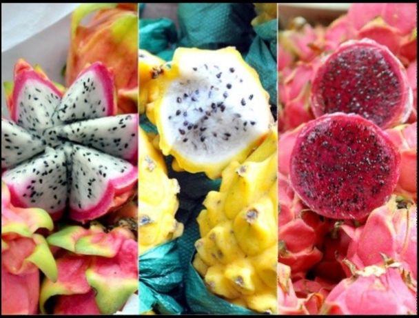 Pitayas plantas enraizadas