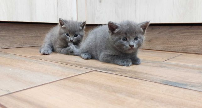 Двоє кошенят шукають новий дім та нових друзів