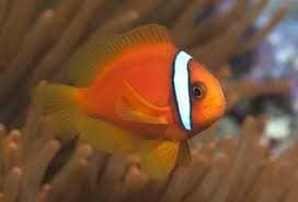 Vendo ou troco peixes