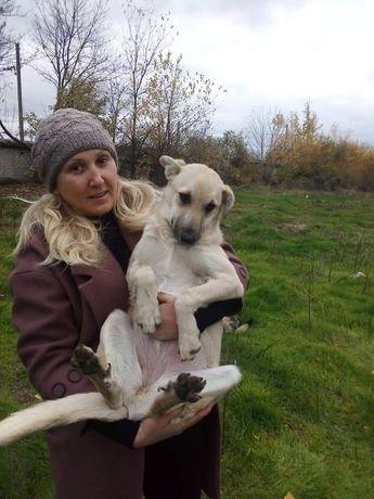 Щенок/собака стерилизована