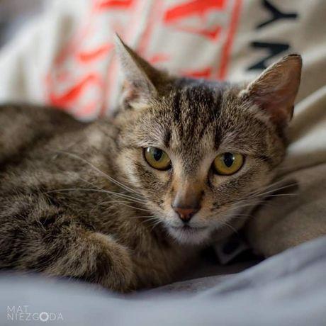 Słodka Lara do adopcji :)
