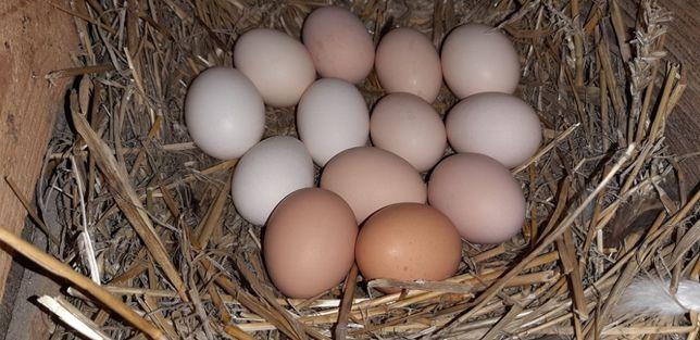 Jajka wiejskie (jaja z wolnego wybiegu) ekologiczne