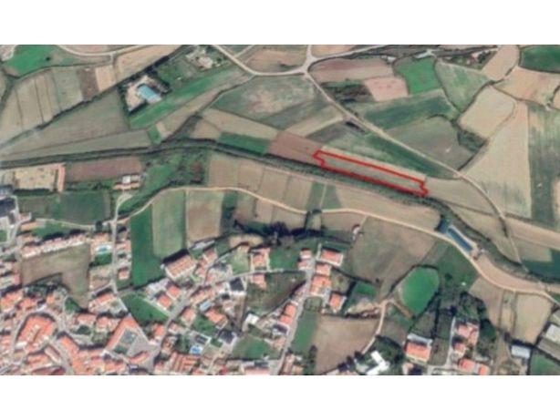 Terreno agrícola, com quase 6000 metros, perto da Lourinhã