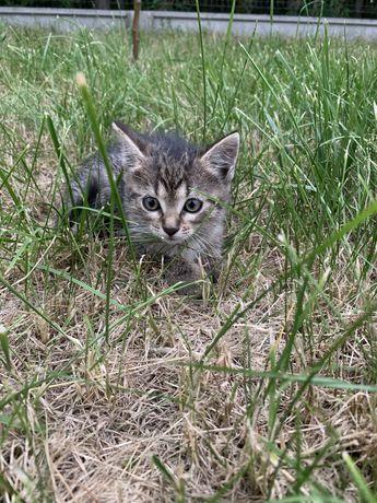 Piękne kotki szukają nowego domu!