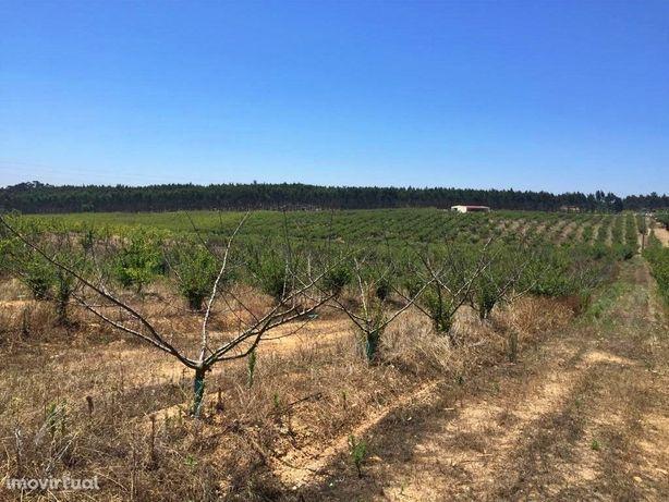 Terreno agrícola com armazém, furo e potencial construtiv...