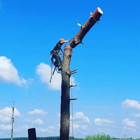 Спилить дерево удалить кронировать удалить  альпинист арборист обрезка