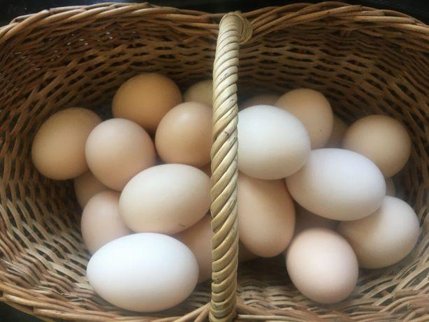 Jajka wiejskie polecam 0.90 gr szt