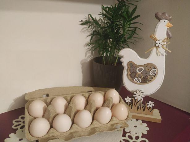 Jajka kur zielononóżek Ekologiczne