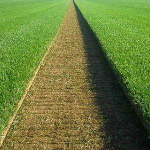 Trawnik z rolki/Trawa z rolki
