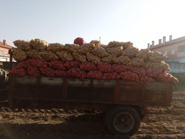 Batatas agria, Picasso e vermelha
