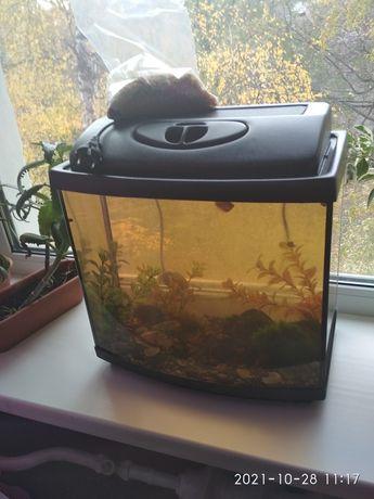 Аквариум с подсветкой для рыбок