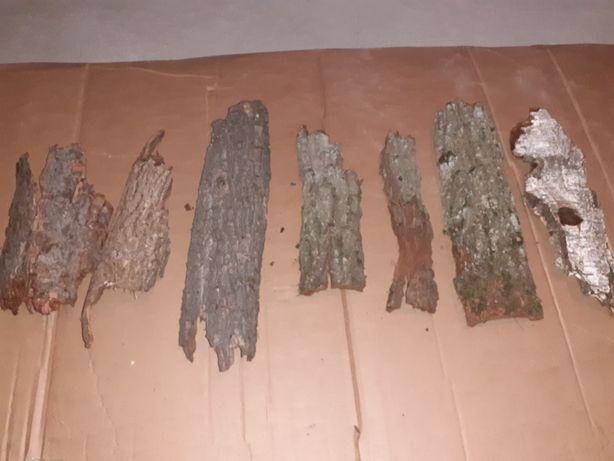 Płaty kory duże kora drzewna