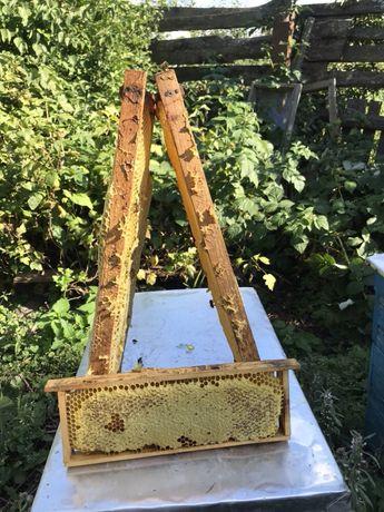 Продам сотовий мед