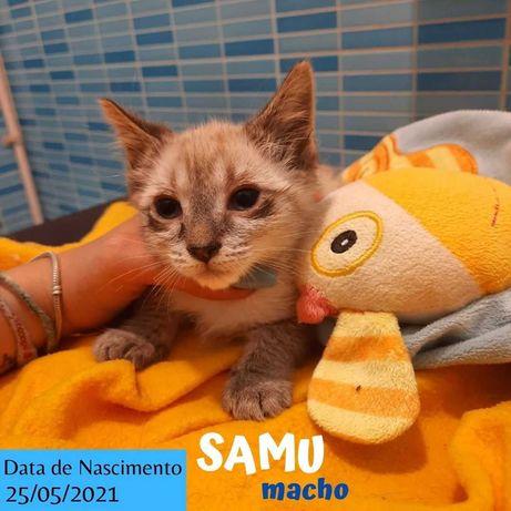 Gatinho 2 meses para adoção (Samu)