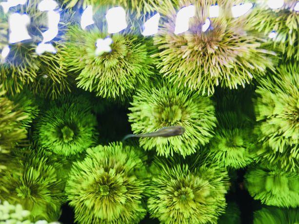 Rośliny z przycinki Dużoo